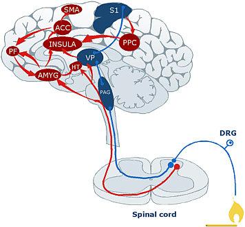El efecto placebo: un poco de neurociencia aplicada (1/2)
