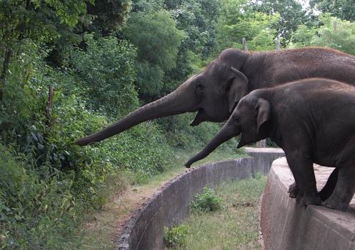 elefantes_trompa