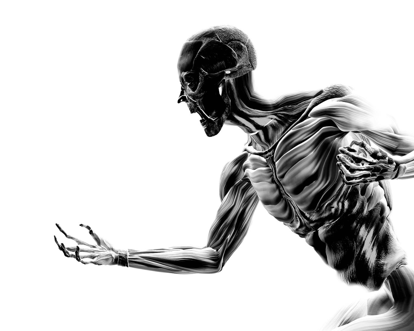 anatomía – Fisioterapia en constante movimiento