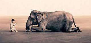 elefante-y-sabidurc3ada